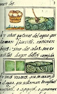 Récolte du Tecuitlatl (Spiruline) à la surface du lac Texcoco au 16ème siècle (Codex Florentin, livre 11)